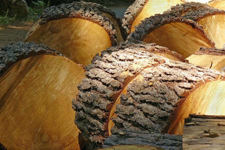 Freshly cut logs Stock Photo - 3470970
