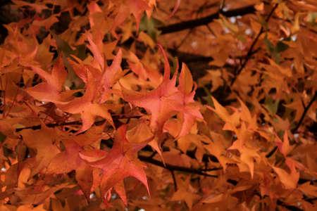 Fall Autumn Leaves photo