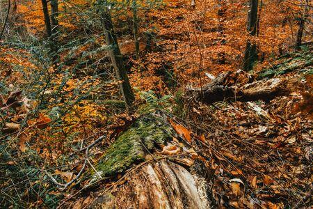 A Shot of a Mossy Log Looking Down a Steep Hill Reklamní fotografie