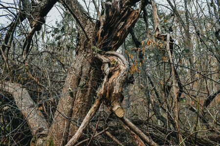 A Shot of a Split Tree That was Struck by Lightning