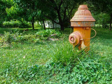 A Shot of a Fire Hydrant Amidst Overgrown Grass Reklamní fotografie