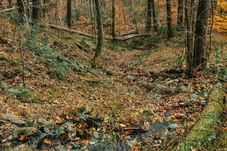 A Low Down Photograph of a Large Rock and the Forest Floor.