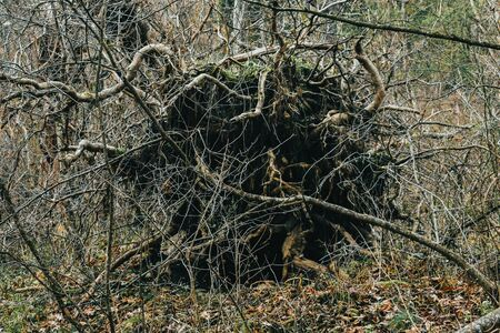 A Shot of the Roots of an Uprooted Tree