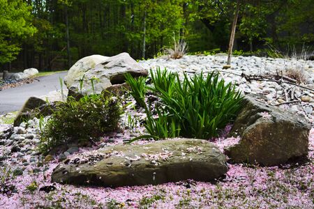 A Shot of Some Bushes and Rocks Surrounded by Pink Petals