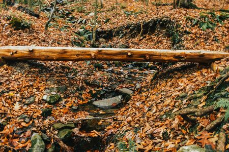 A Shot of a Man Made Log Bridge Using Two Sanded Pieces of Wood, Crossing a Very Small Stream.