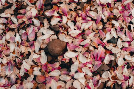 A Photograph of Pink Flower Petals with Gray Rocks