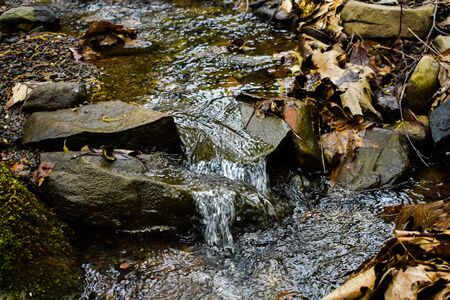 A Close up Shot of a Small Stream Flowing Down Some Rocks, Surrounded by Foliage and Leaves.