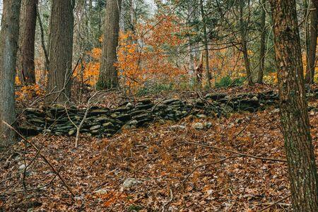 A Shot of a Rock Wall in an Autumn Landscape