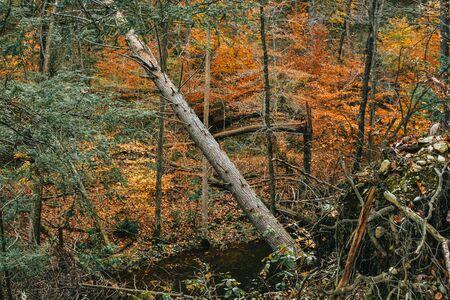 A Shot of a Fallen Tree in an Autumn Scene