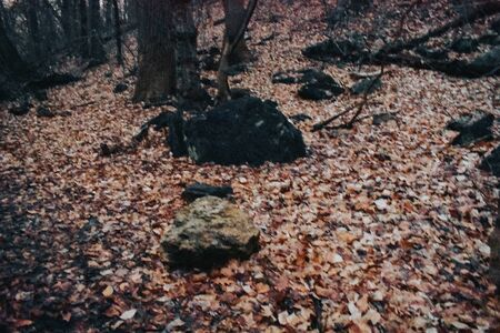 A Photograph of a group of rocks on the Forest Floor