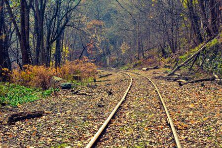 A Shot of a Railroad Running Through the Woods Reklamní fotografie