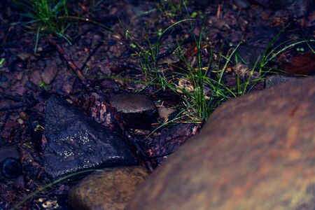 A Close Up Photograph of the Wet Forest Floor
