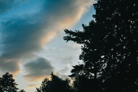 A Shot of the Sky in the Background and a Silhouette of Trees in the Foreground Stock Photo