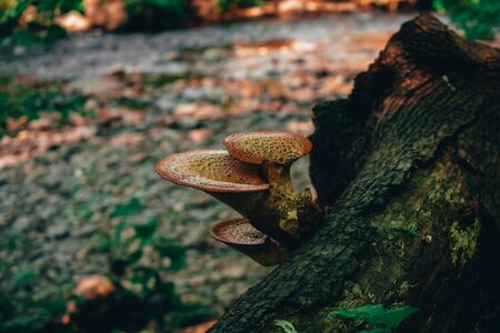 A Photograh of a Mushroom Growing on a Log With a River in the Background Reklamní fotografie
