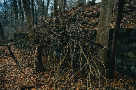 A Shot of a Fallen Tree's Branches