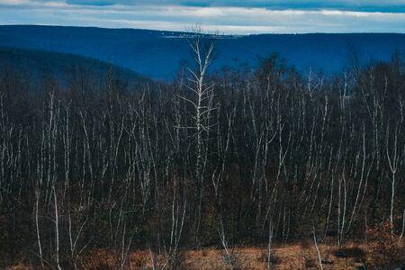 A Shot of a Dead Forest Landscape Reklamní fotografie