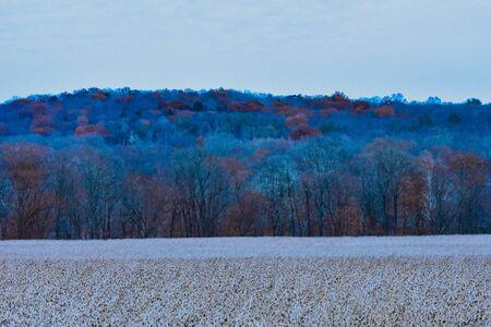 A Shot of a Dead Crop Field in Winter