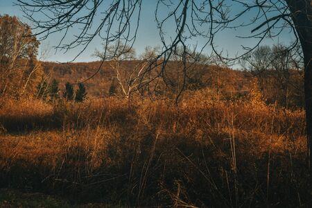 A Landscape Shot of an Autumn Scene