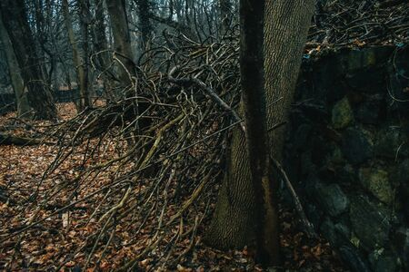 A Shot of a Fallen Trees Branches