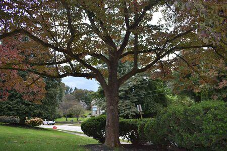 A Shot of a Colorful Tree in a Suburban Neighborhood Reklamní fotografie