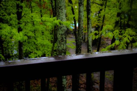 A Shot of a Wet Fence and Forest