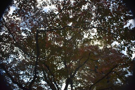 A Wide Angle Shot of Tree Branches and the Sky taken from underneath.