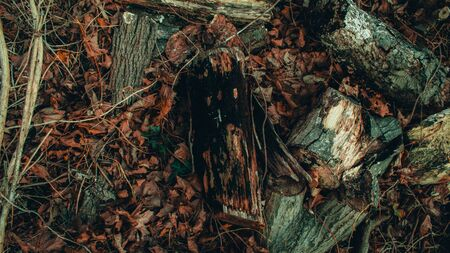 Black Rotting Wood in a Dead Forest Surrounded by Sticks and Leaves