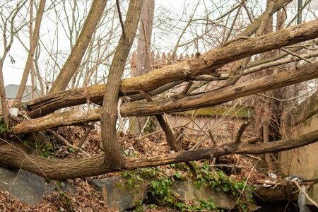 Large Dead Tree Branches Laying Vertically Over a Gap Фото со стока