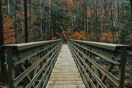 A Centered Photograph of a Bridge in an Autumn Forest