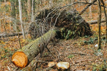 A shot of a Fallen and Up-Rooted Tree