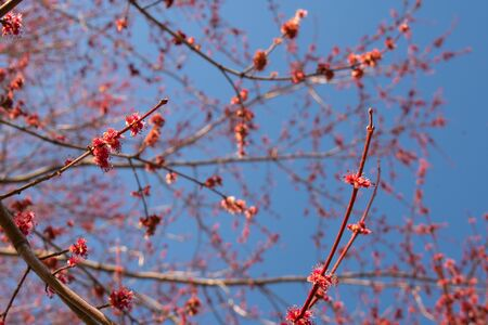 A Blooming Tree With Small Pink Buds on It