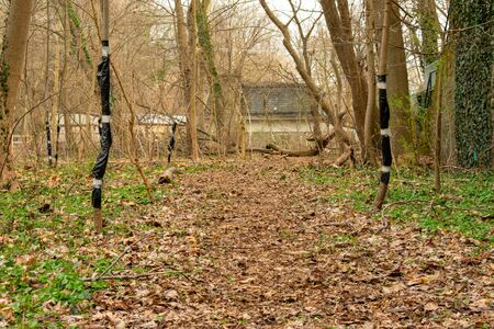 A Brown Path in a Forest With Sticks On Each Side