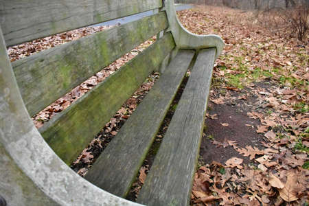 A Concrete and Wood Bench With Moss Growing on it in an Autumn Forest Banque d'images