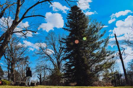 A Small Man Looking Up at a Massive Tree