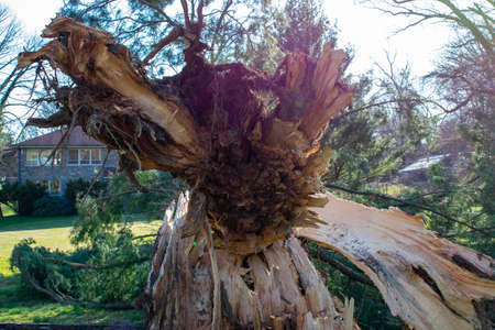 A Split Stump With a Large Fallen Tree After a Storm at the Elkins Estate