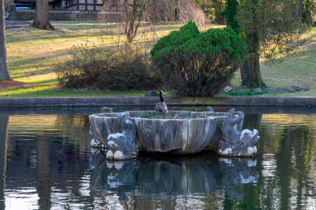 A Canadian Goose Standing On An Old and Broken Fountain in the Middle of a Pond at the Elkins Estate 版權商用圖片