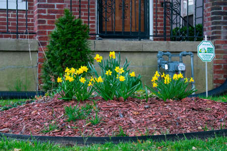 A Garden in a Front Yard in Suburban Pennsylvania With Small Yellow Flowers