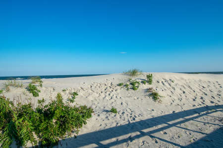 A Sand Dune at th eBeach in Wildwood New Jersey With Green Plants and a Shadow of a Fence on It