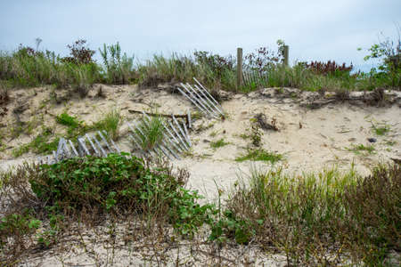 A Sand Dune on the Beach With a Broken Wood Fence and Overgrown Plants