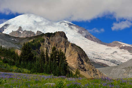 Wildflower meadow and Emmons glacier, Mount Rainier National Park photo