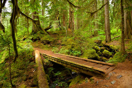 northwest: Old-growth lush forest and small wooden bridge, Mount Rainier National Park