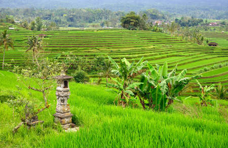 Altar in famous Jatliluwih rice paddy in Bali, Indonesia photo