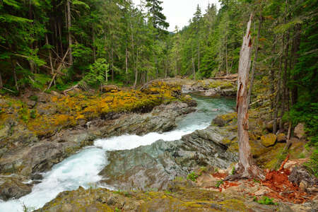 Dead tree and Ohanapecosh river, Mount Rainier National Park, USA photo
