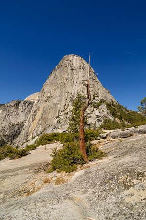 granite park: Dead tree standing in front of a granite dome, vertical, Yosemite national Park