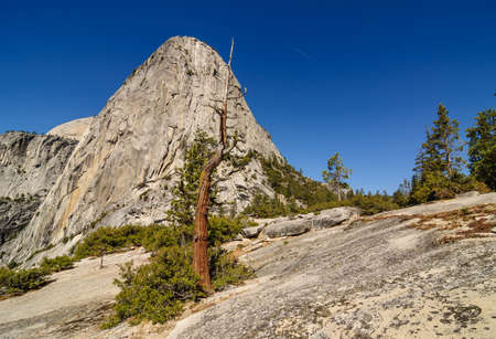 granite park: Dead tree standing in front of a granite dome, Yosemite national Park