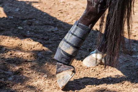 Close-up of a horse's foot. The horse has orthosis on its leg. Reklamní fotografie
