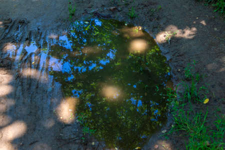 A pool on a dirt road in which the branches of trees and the blue sky are reflected.