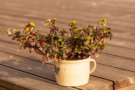 Bunch of tiny flowers nestled in a mug. Flower pot stands on brown terrace.