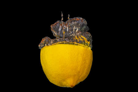 Half a lemon thrown into the water. Bubbles of water come from the lemon. The photo has a black background.