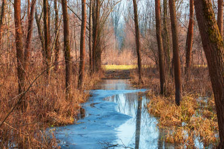 Floodplain forest. There is frozen water between the trees